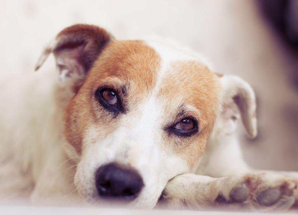 5 причин, почему собака какает с кровью и методы лечения
