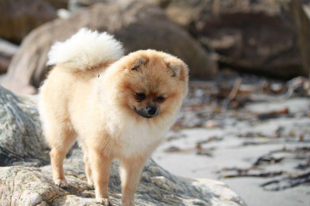 Независимо от разновидности пес нуждается в дрессировке