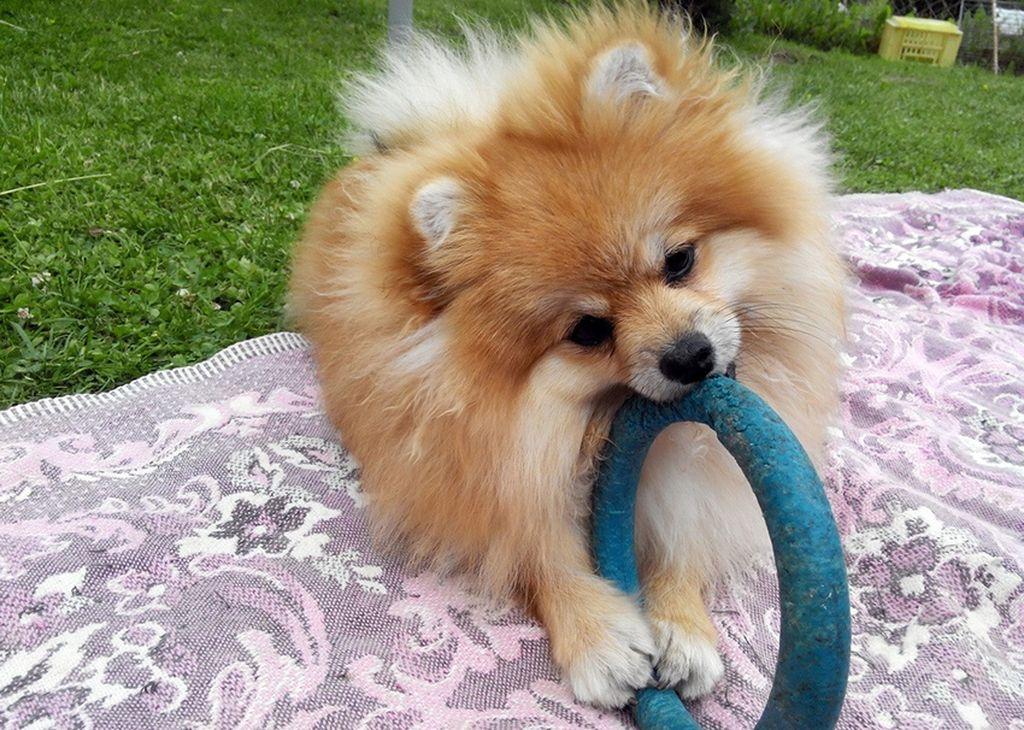 Каждая собака имеет свой характер, опираясь на который и следует выбирать имя