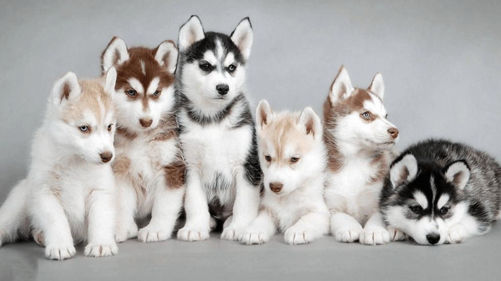 Имя для щенка – первое, что он воспринимает и на что ориентируется в этом мире