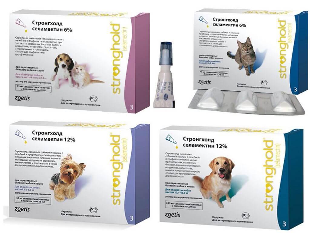 Симптомы и лечение сердечных глистов или червей у собак