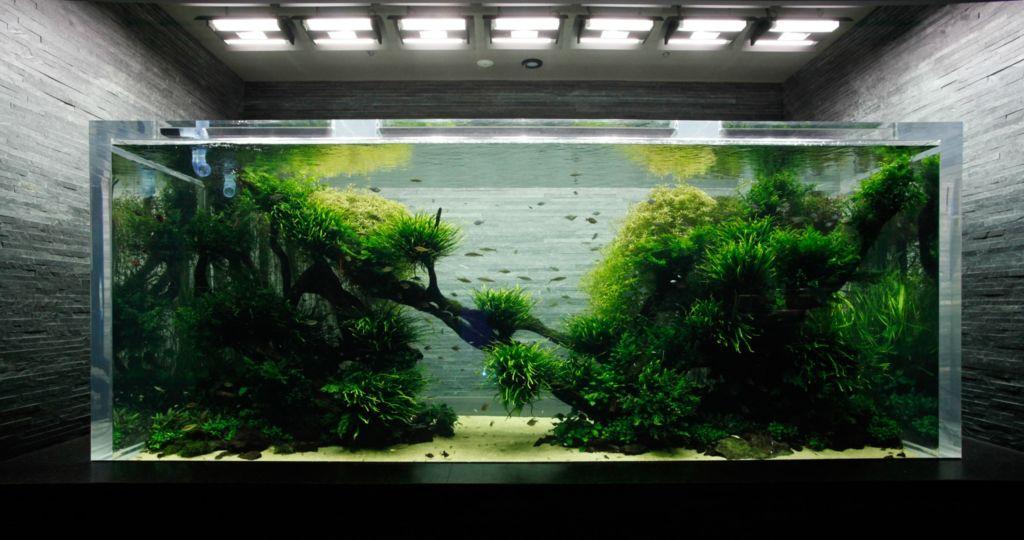 Аквариумы Такаши Амано восоздают кусочек дикой природы, только под водой