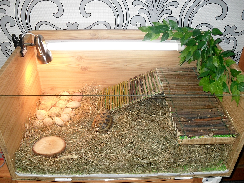 В домашних условиях наилучшим вариантом для черепахи будет горизонтальный террариум