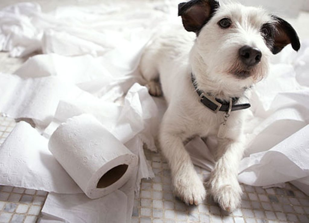 5 видов туалетов для собаки в квартире и как приучить щенка