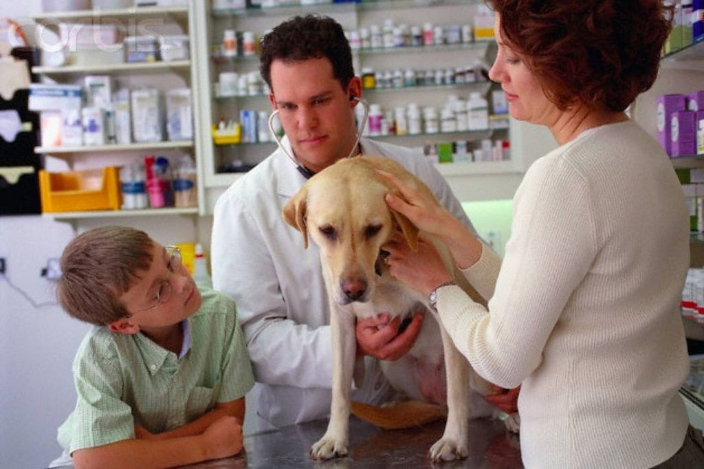 Давать те или иные препараты можно только после консультации с ветеринаром