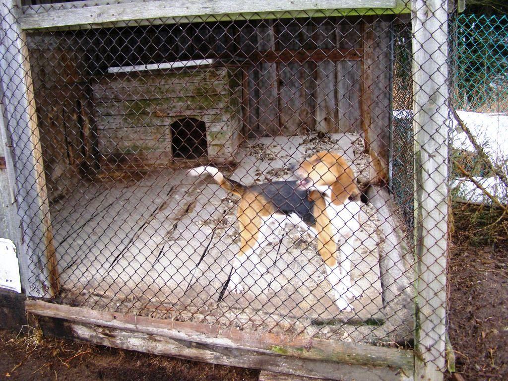 Вольер позволяет держать собаку без привязи