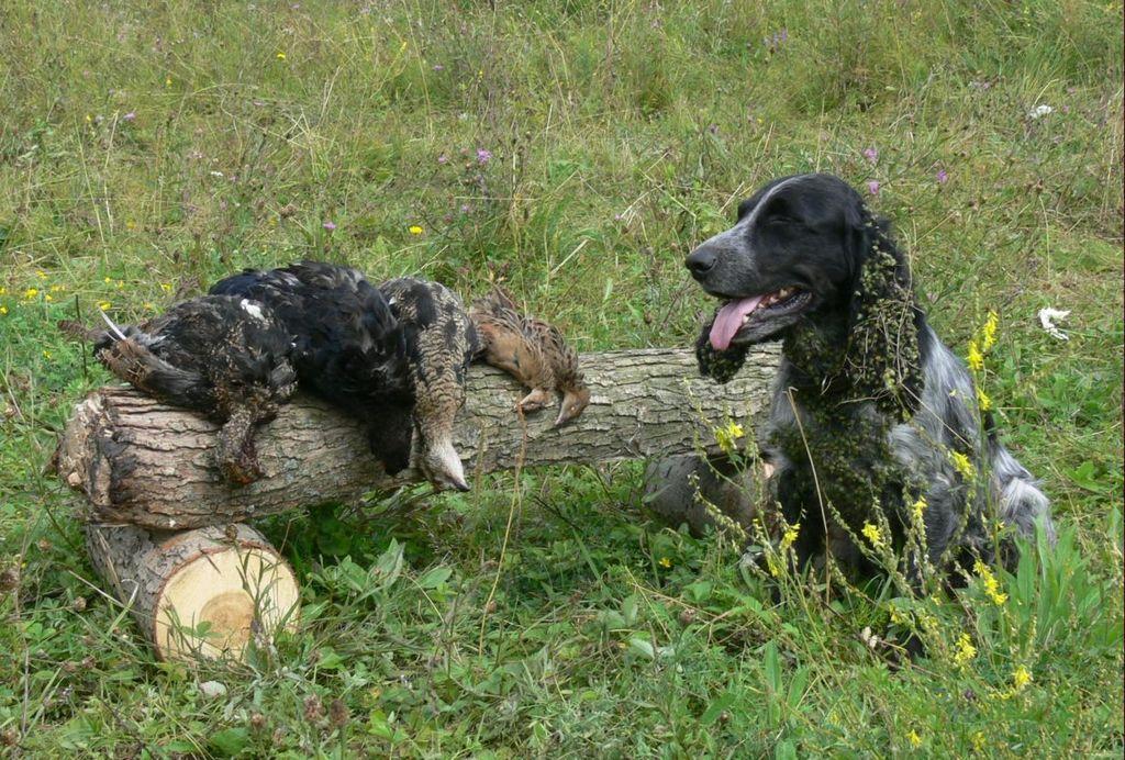С охотгничьей собакой нужно тщательно заниматься и вести активные прогулки