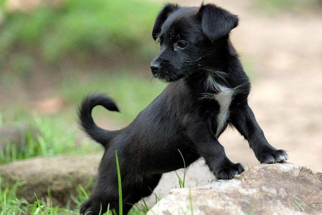 О чем следует знать, если вы решили взять собаку домой