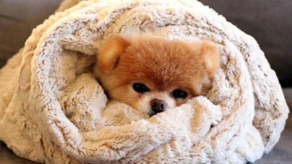 5 причин, почему собака дрожит и трясется