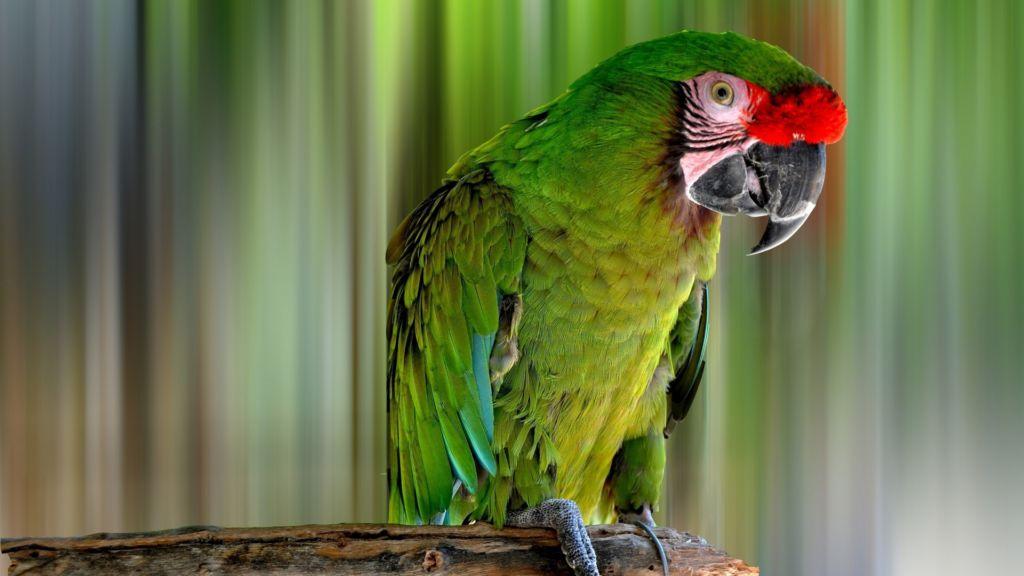 6 видов попугая ара —описание и как выглядят