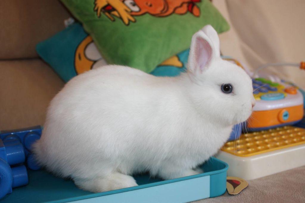 Вакцины и прививки карликовым кроликам необходимы