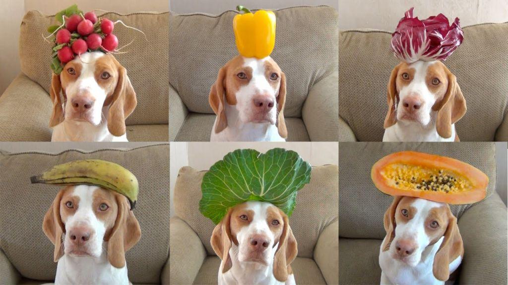 Какие овощи и фрукты можно давать собаке и список разрешенных продуктов