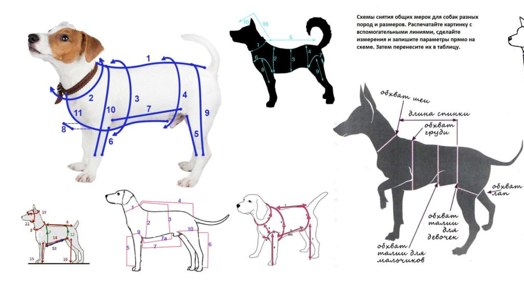 Удобный комбинезон для собаки мелких пород своими руками