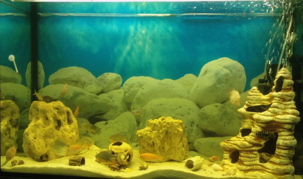Аквариум псевдо море 200 литров