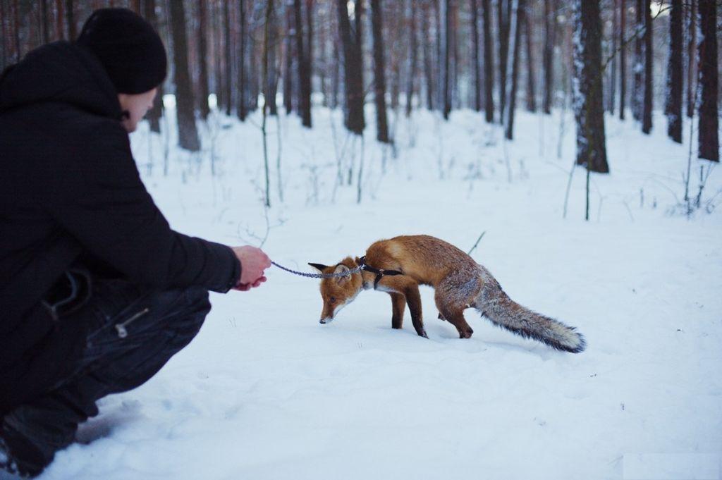 Выгуливать животное нужно только на шлейке
