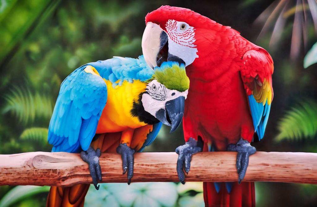 Самые большие попугаи в мире