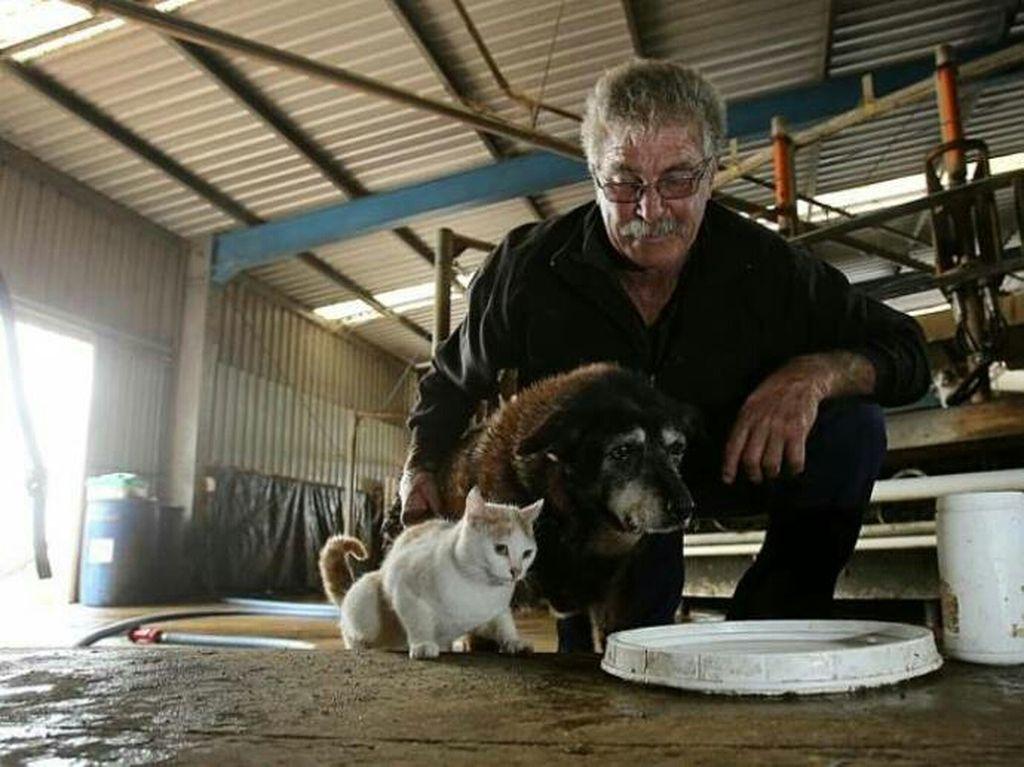 Самой старой собаке в мире было почти 30 лет