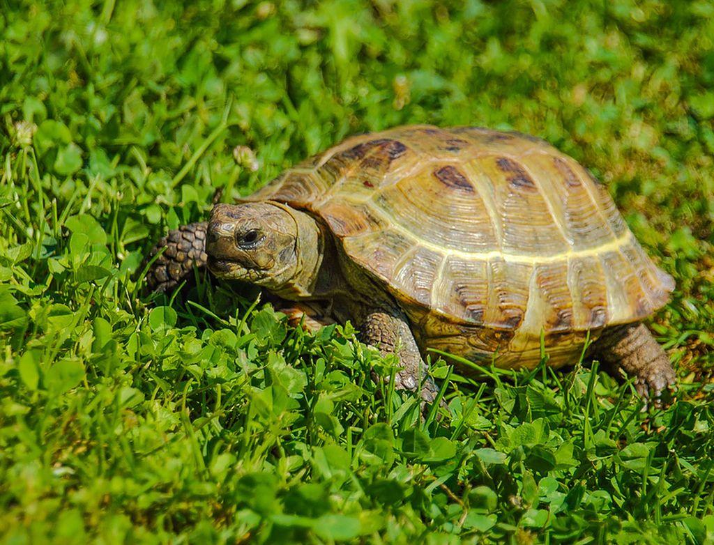 От чего умирают черепахи и как понять мертва она или в спячке