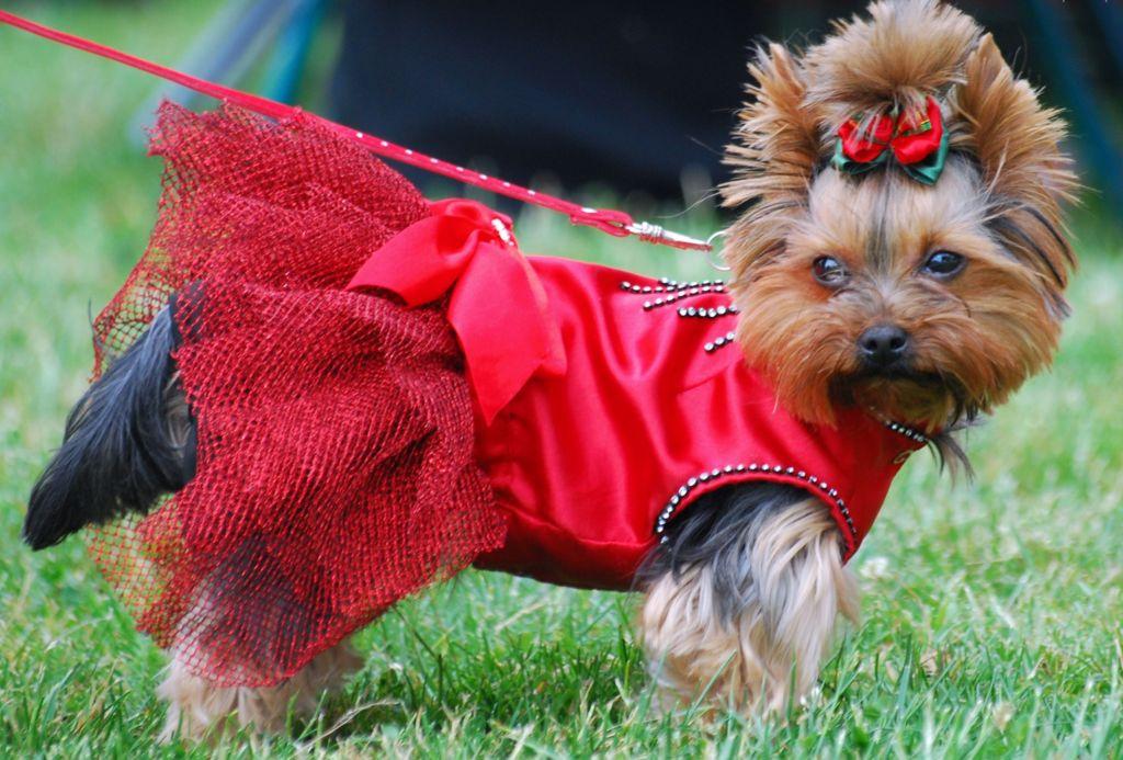 У собак, то обычно период течки вполне узнаваем по определенным признакам