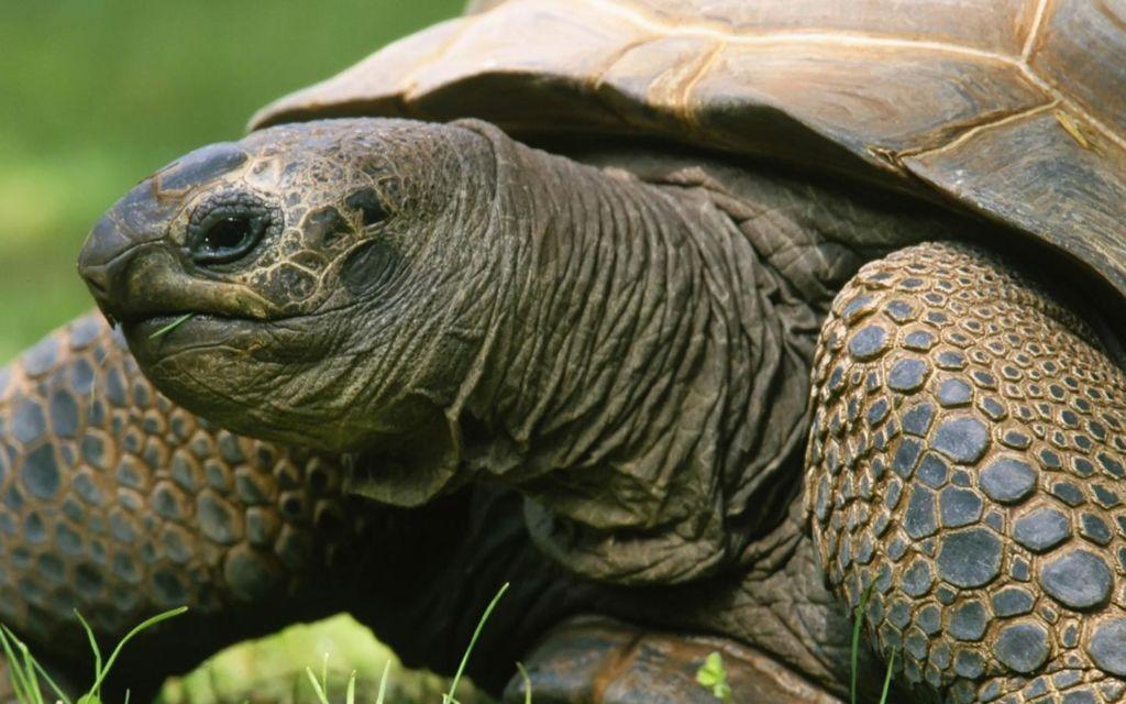 Продолжительность жизни черепах на сегодняшний день считается самой длинной