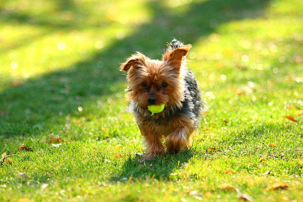 Помимо приучения к лотку воспитанная собака любого размера должна знать основные команды