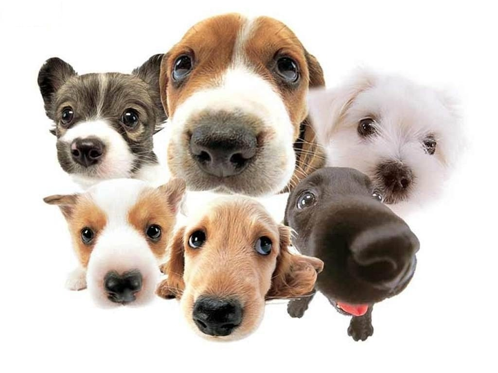 Приобретая собаку, вы в первую очередь задумываетесь о выборе для нее красивой и звучной клички