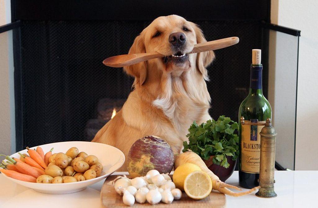 Чем правильно кормить собаку на натуралке