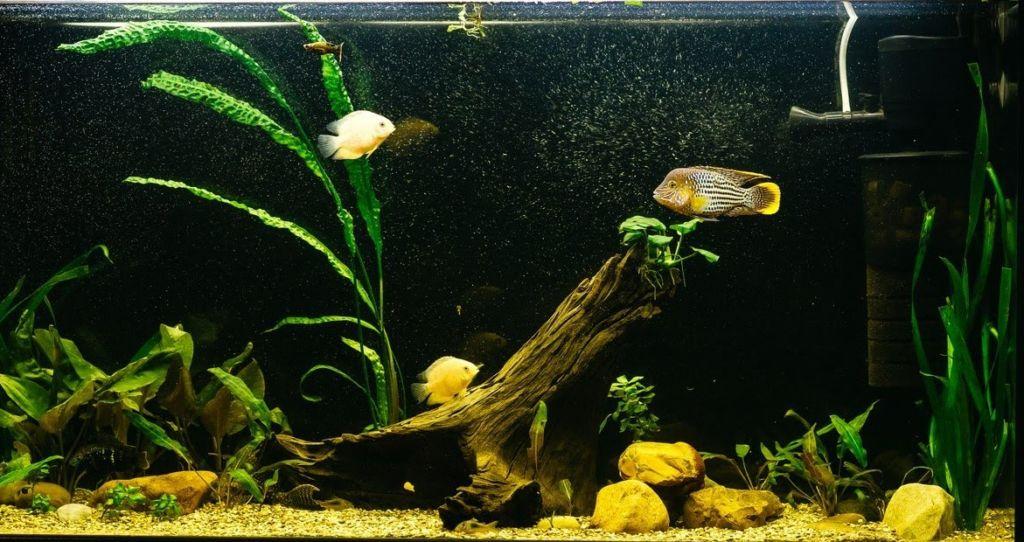 Пересадка всегда стресс для рыбок, это, наверное, самое опасное для них время