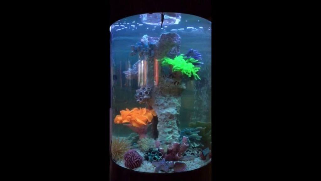 Аквариум колонна на 150л с тумбой и рифом
