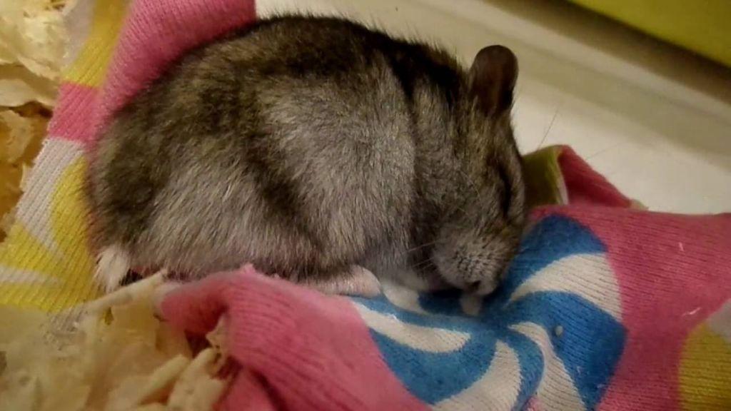 Содержать животное с ночным образом жизни – значит не беспокоить его во время дневного сна