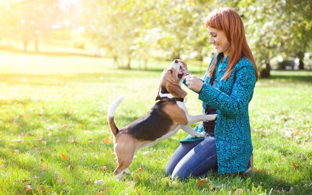 Правильная дрессировка собак в домашних условиях