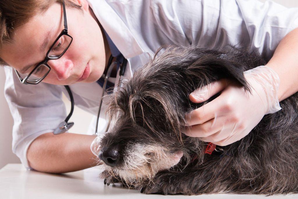 Ответственность за выздоровление пса лежит на владельце