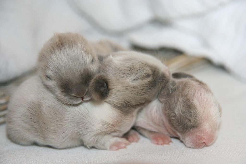 Крольчата появляются на свет глухими, слепыми и нуждаются в особом уходе