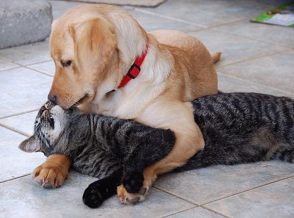 Щенка и котенка нужно заводить почти одновременно