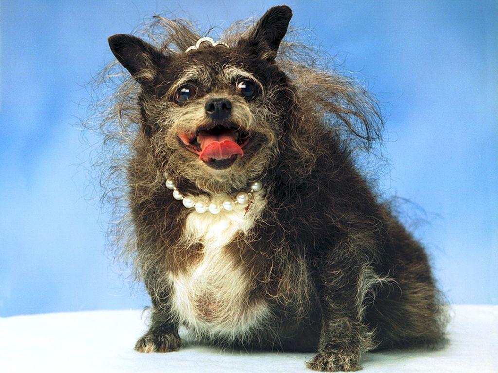 Самые некрасивые породы собак в мире