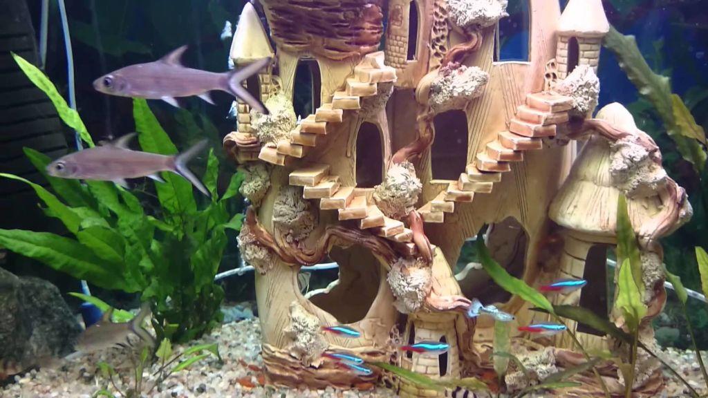 Акулий балу с другими видами аквариумных рыб