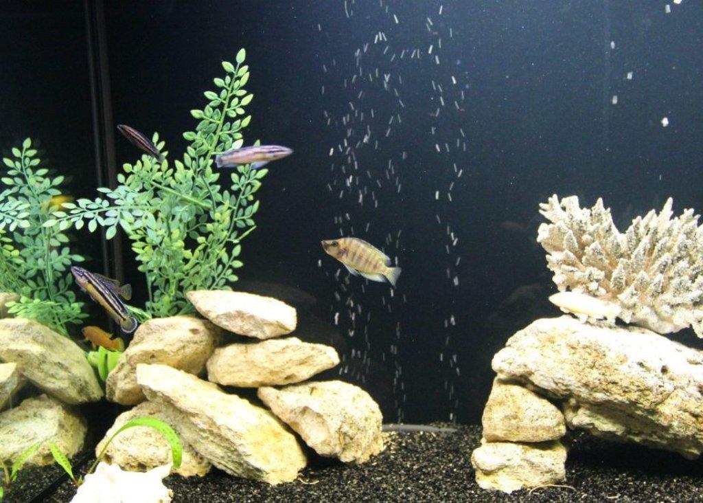 Гарра руфа хорошо уживается с мелкими рыбками
