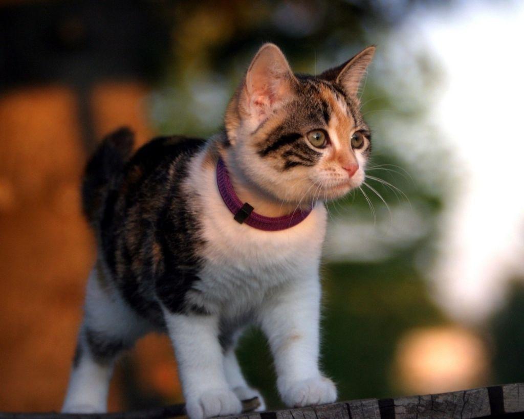 Котенок с ошейником от блох и клещей на улице