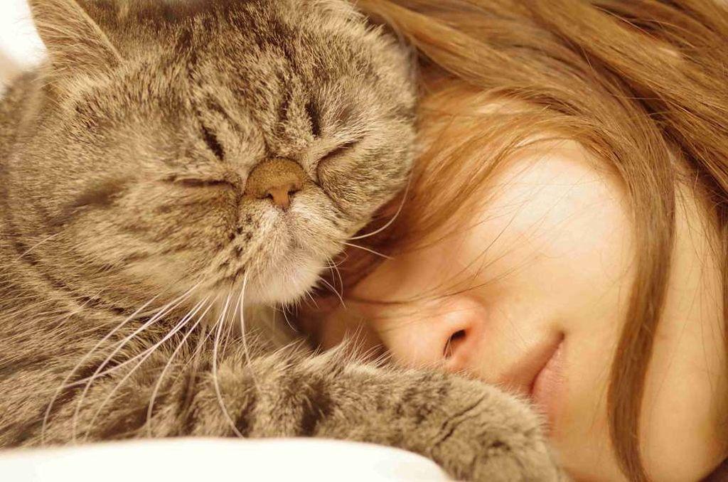 Кошка дружелюбная и хорошо уживается с людьми и другими животными