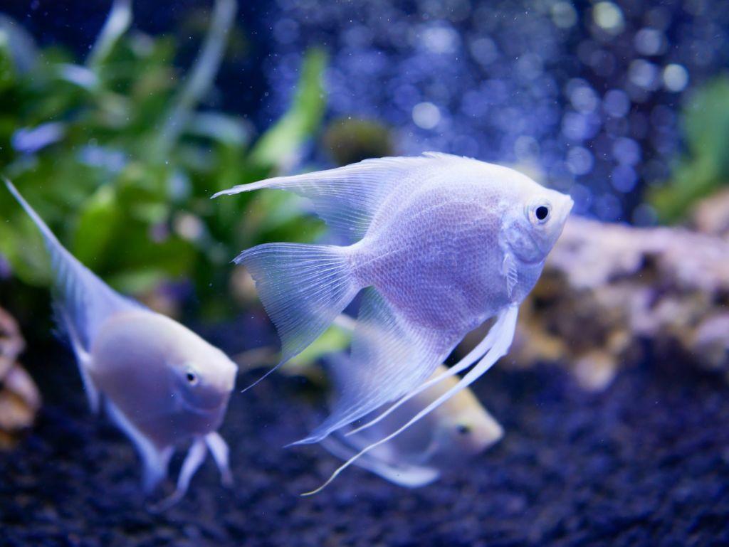 Имена для рыбок