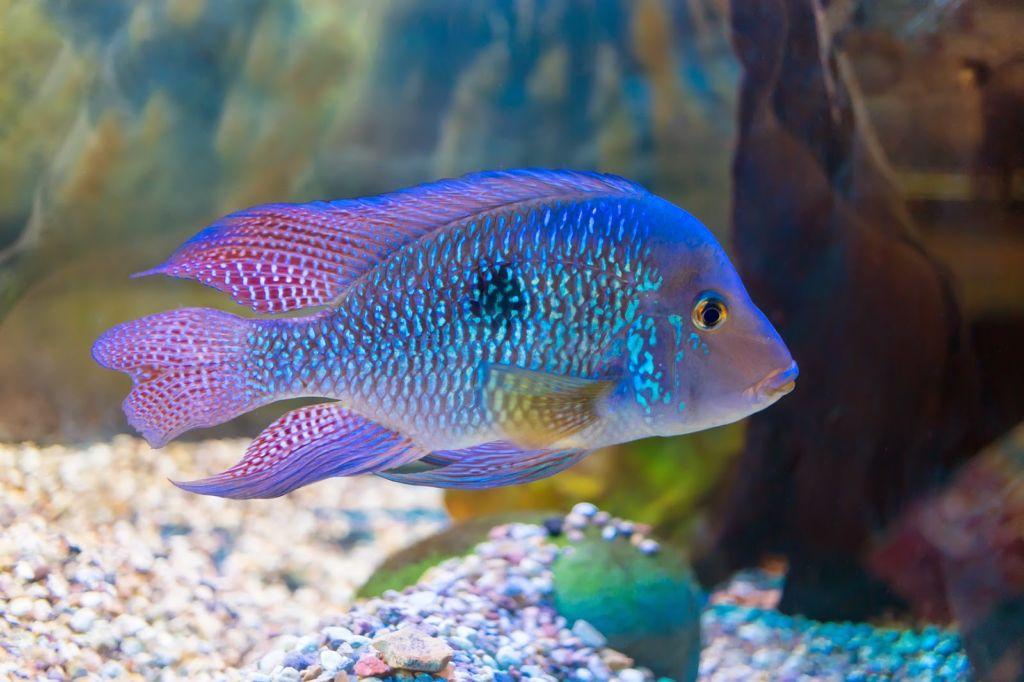 Рыбы сами заботятся о потомстве