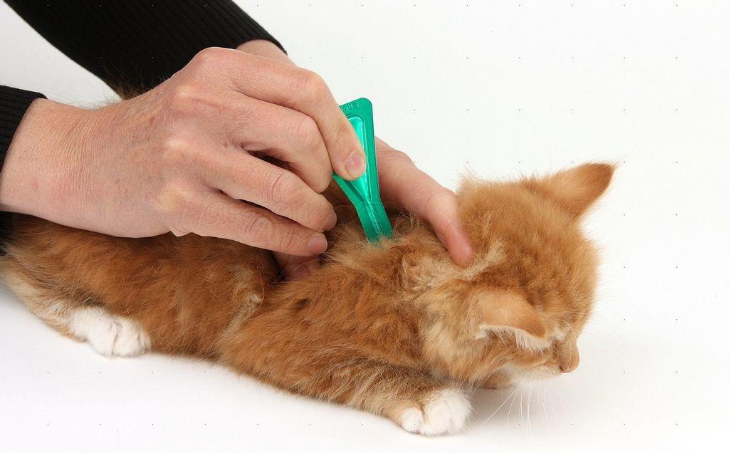 Препарат обязательно применять для кошек, посещающих улицу