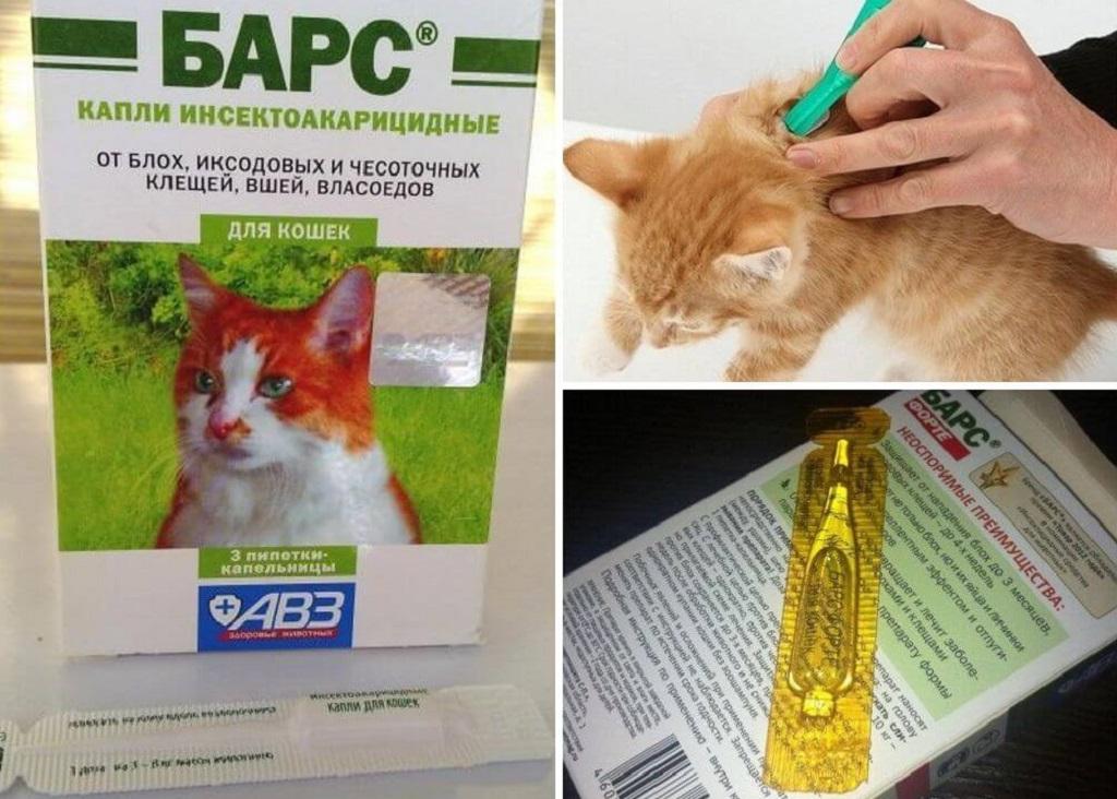 Способ применения для кошек