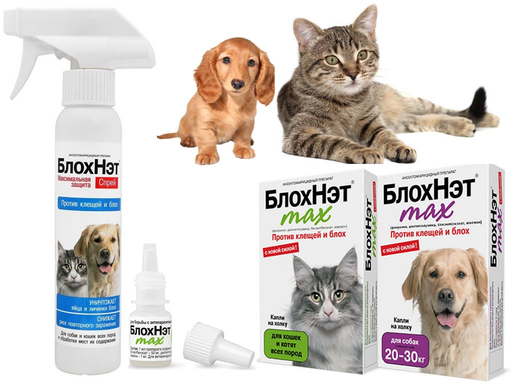 Блохнэт выпускается в виде спрея и капель для кошек и собак
