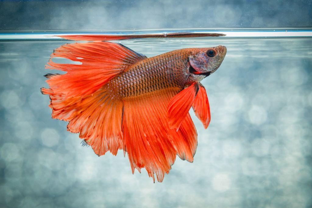 Самое популярное имя для рыбки самца