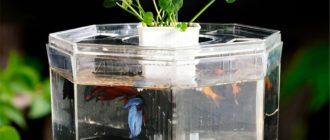 Рыбки для аквариумов разного объема