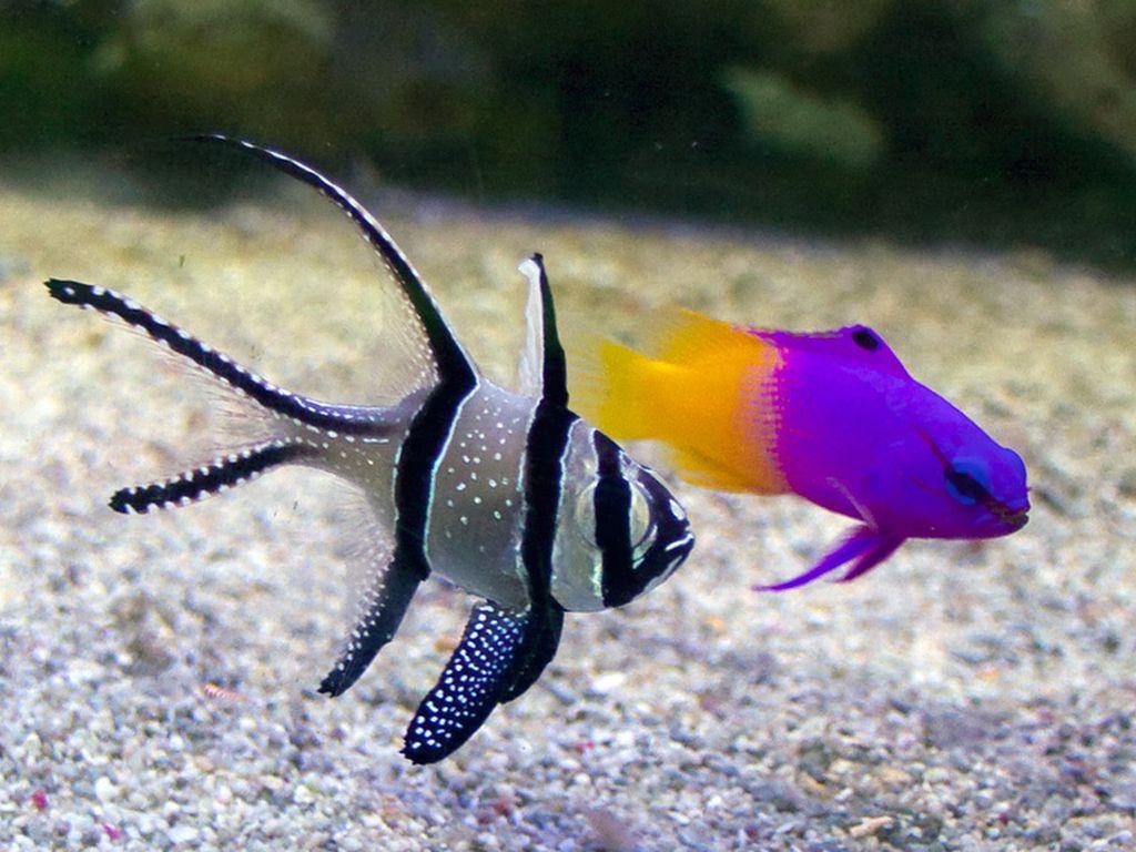Уход и содержание аквариумных рыбок