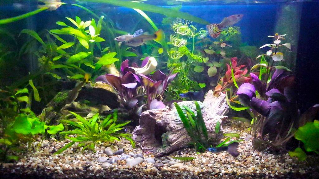 Наполнение аквариума начинается с укладки грунта