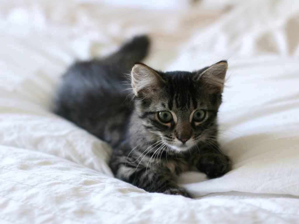 Смекту лучше не давать аллергичным кошкам