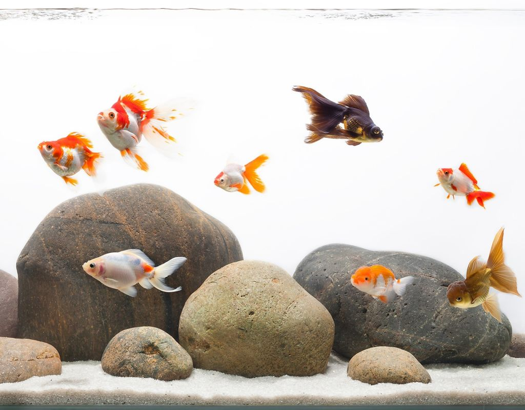 Какие рыбки могут жить в аквариуме без фильтра и кислорода